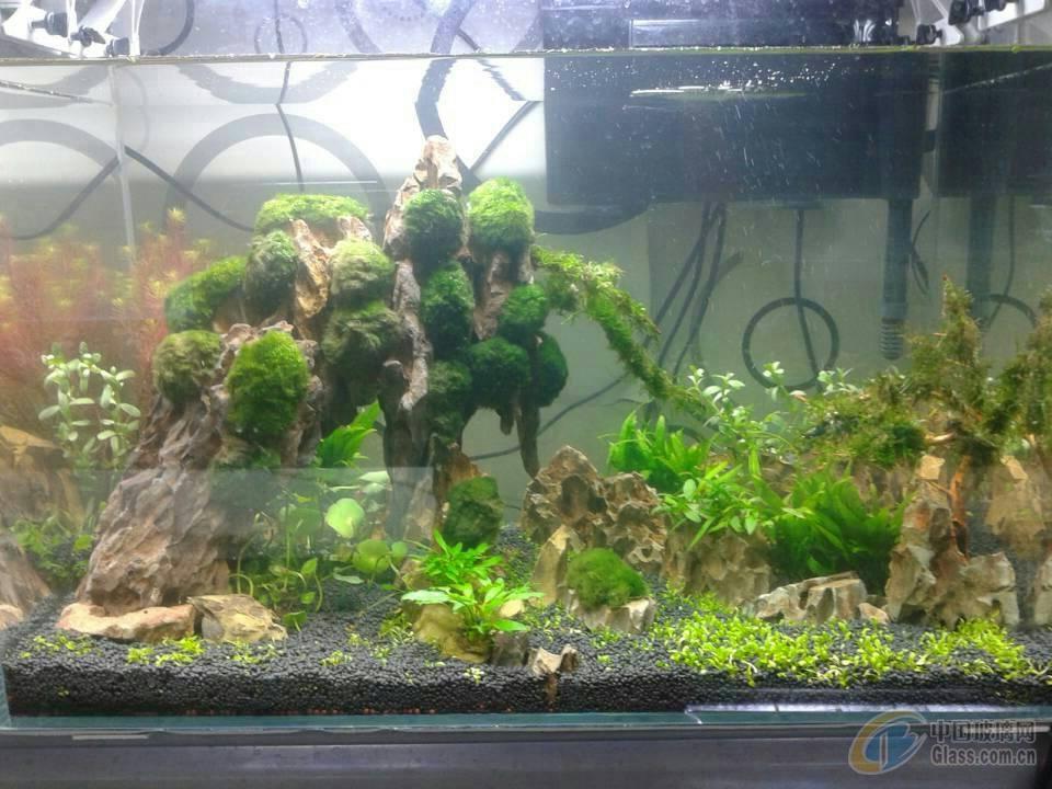 巴厘岛玻璃树桩鱼缸