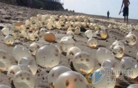 沙滩上出现一堆水晶玻璃球,很美很壮观,你知道是什么东西吗?