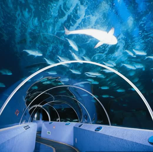 西安鱼缸/海洋馆工程专业定制公司/专业设计