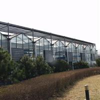 秦皇岛温室玻璃厂