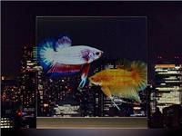 玻璃表面能够投影图像吗  压花玻璃有着哪些特点呢