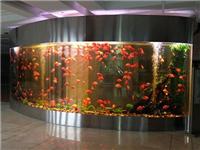 鱼缸用哪种玻璃材料更好  超白玻璃鱼缸有什么优点