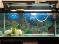 玻璃鱼缸裂开了怎么修补  鱼缸建议使用哪一种玻璃