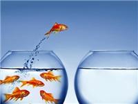 粘鱼缸玻璃使用什么胶好  玻璃胶酸性和中性的区别