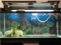 自制鱼缸尺寸多大较合适  鱼缸采用哪种玻璃更耐用