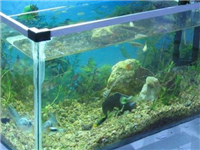玻璃鱼缸通常用什么材料  该用哪种胶粘贴鱼缸玻璃