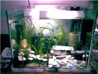 制作鱼缸用什么玻璃好  浮法玻璃有什么优点