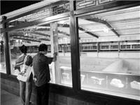 古城安装玻璃展棚 游客现场观看发掘