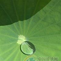 204双组分高硬度疏水自洁有机硅树脂