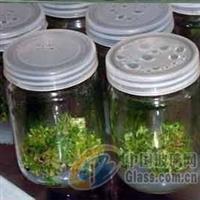 北京350毫升菌种瓶