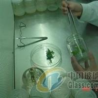 北京河北350毫升虫草培育瓶
