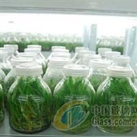 北京650毫升菌种瓶