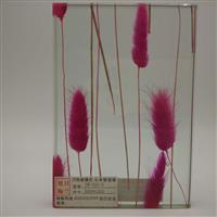 湿法夹胶玻璃绿色植物夹胶玻璃