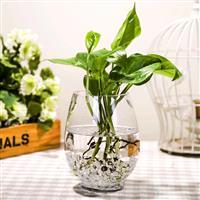恐龙蛋花瓶 简约 透明玻璃花瓶