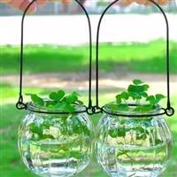南瓜玻璃花瓶小吊瓶插花小花瓶