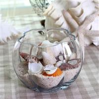 透明玻璃花瓶可養植物 擺飾