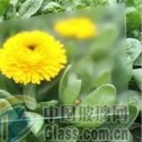 防眩玻璃,AG玻璃,哑光玻璃