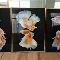50×70钢化玻璃装饰画