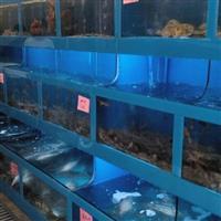 海口餐厅海鲜鱼池定做