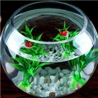 玻璃瓶水培瓶创意原型玻璃鱼缸桌面装饰瓶