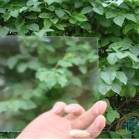 供应低反射玻璃,防眩玻璃,相框玻璃