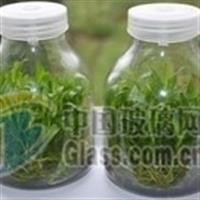北京650毫升菌种培育瓶