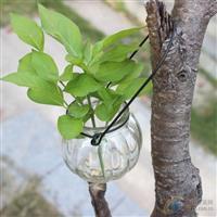 供应南瓜吊篮玻璃花瓶