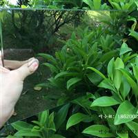 供应5mm辨认室单向玻璃